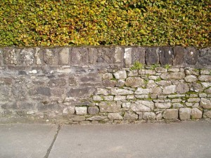 Stone wall & Maidenhair Spleenwort fern (Asplenium trichomanes) Photo BEC Consultants