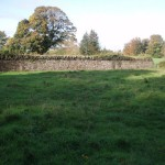 Stone wall and improved agricultural grassland, photo by BEC Consultants