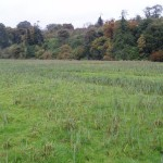 Wet grassland and mixed woodland, photo by BEC Consultants