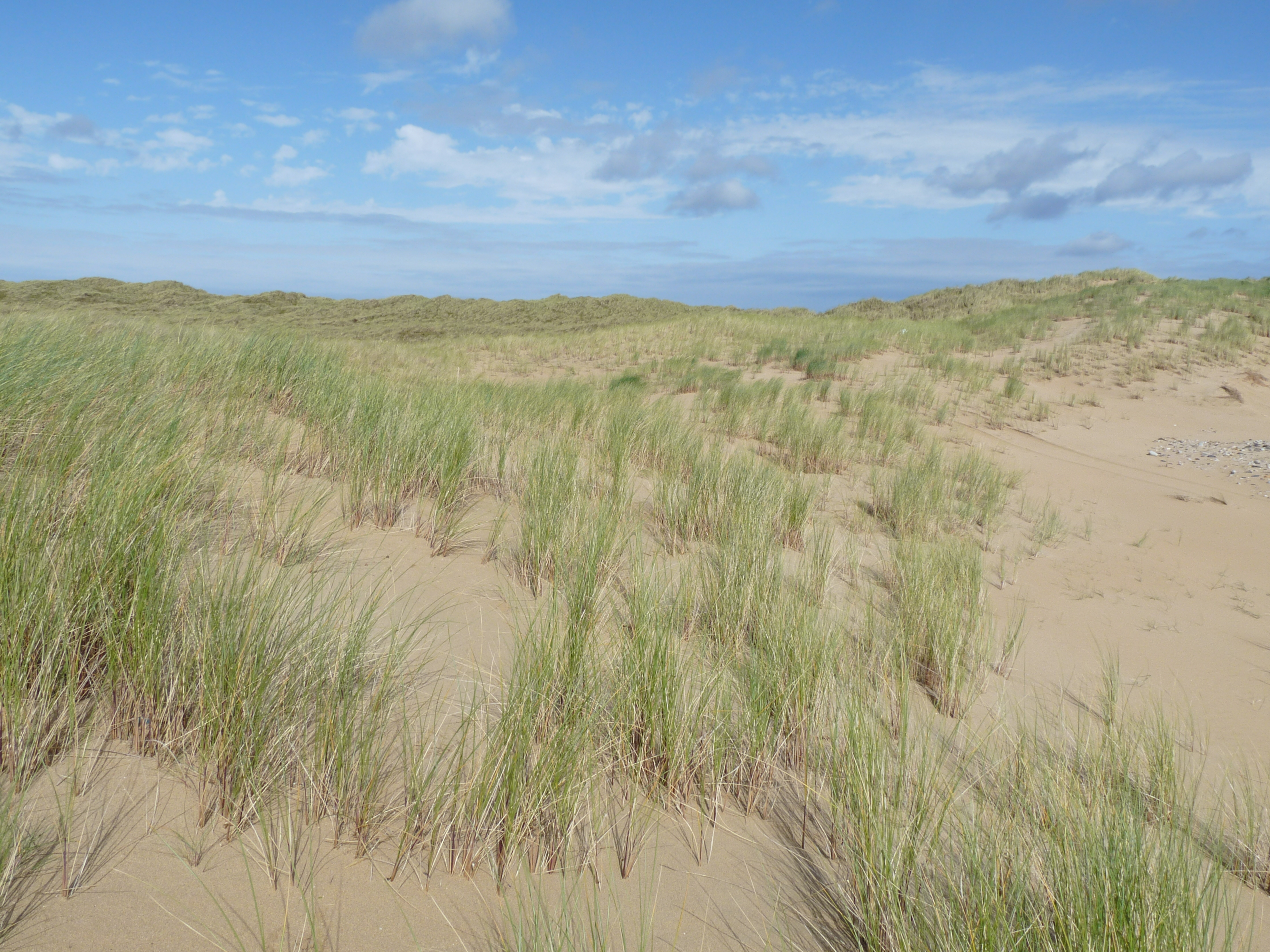Sand Dune Monitoring Survey | BEC Consultants