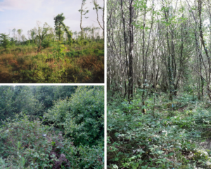 Fixed-point photography at Coill an Fhaltaigh in Co. Kilkenny that demonstrates vegetation succession. The image shows clearfell in 2003 (top-left), with scrub habitat in 2009 (bottom-left) and young native woodland present in the same location in 2019 (right). Photos by Philip Perrin and Orla Daly.